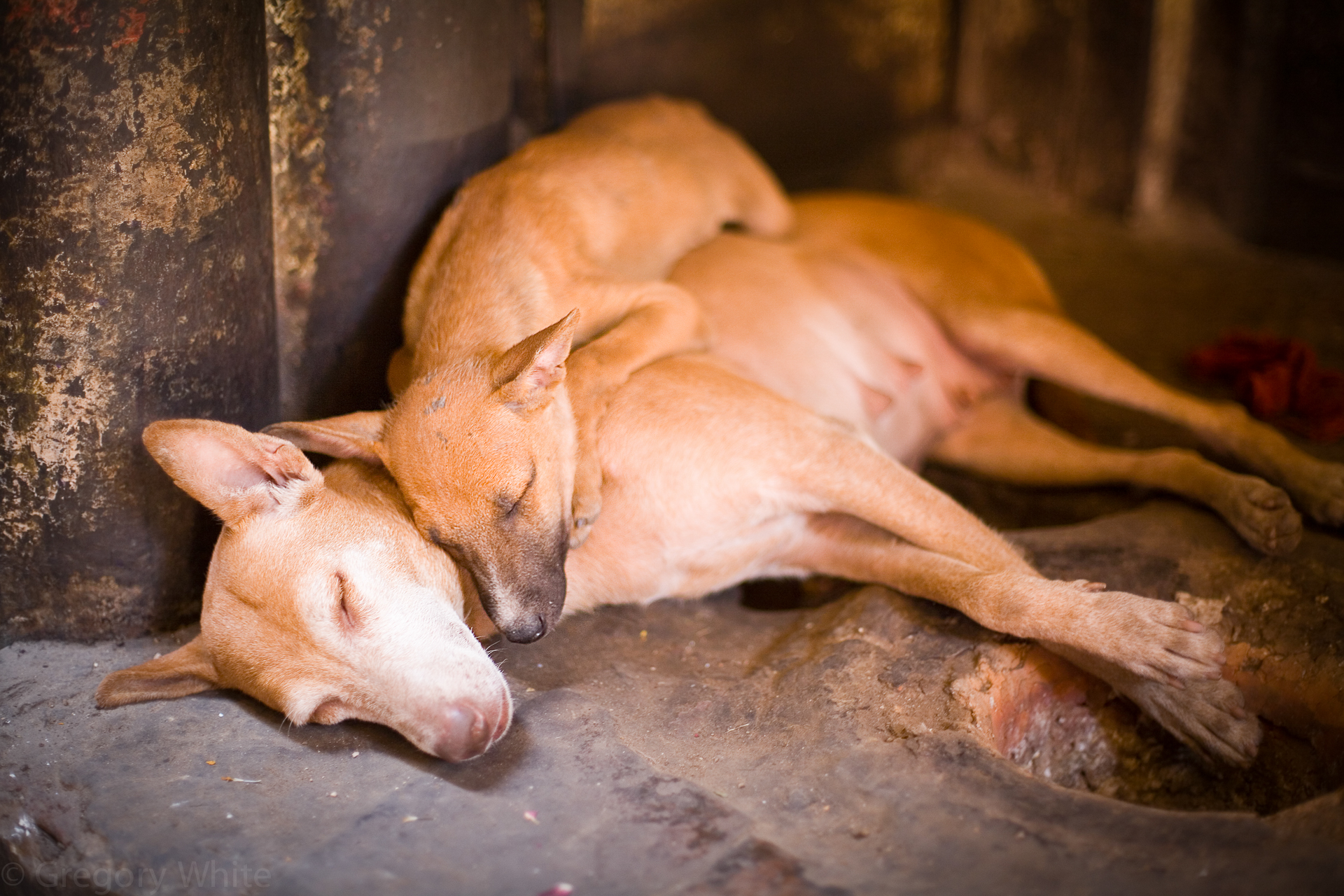 Varanasi street dogs take a siesta in the heat of the day.