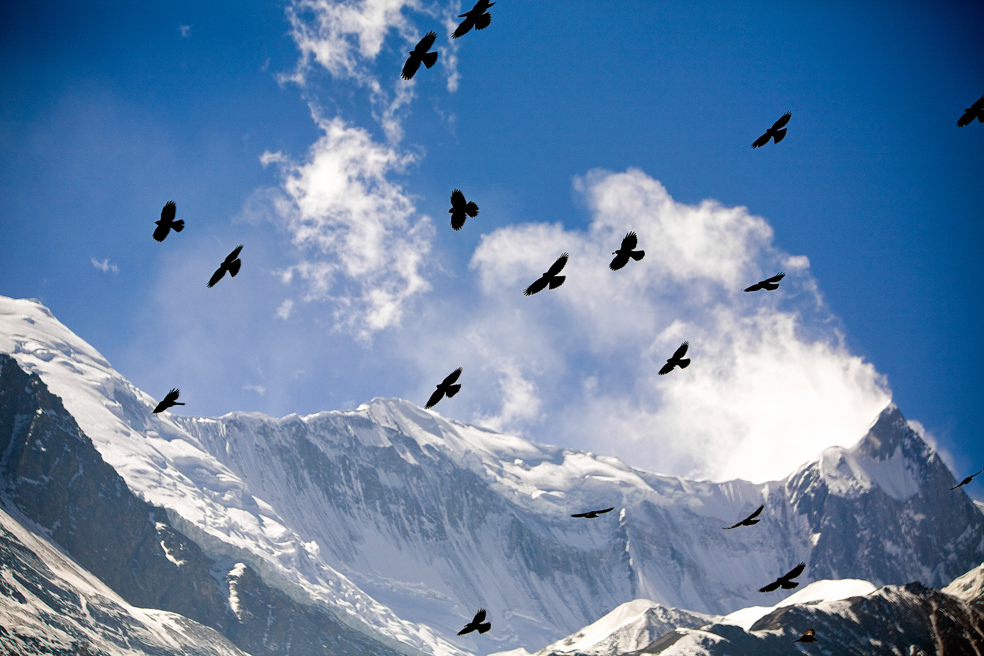 Crows soar in front of Kangshar Kang in the Annapurna mountains.